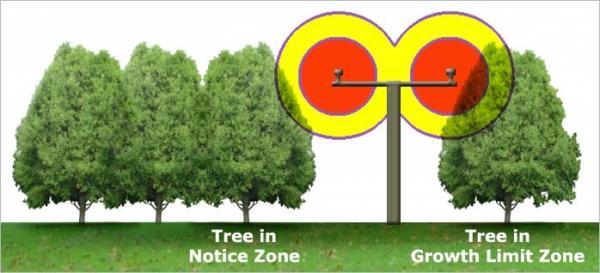 Tree in notice zone